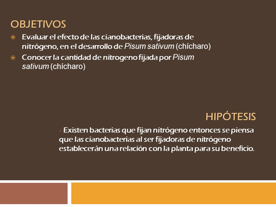 OBJETIVOS Evaluar el efecto de las cianobacterias, fijadoras de nitrógeno, en el desarrollo de Pisum sativum (chícharo) Conocer la cantidad de nitroge