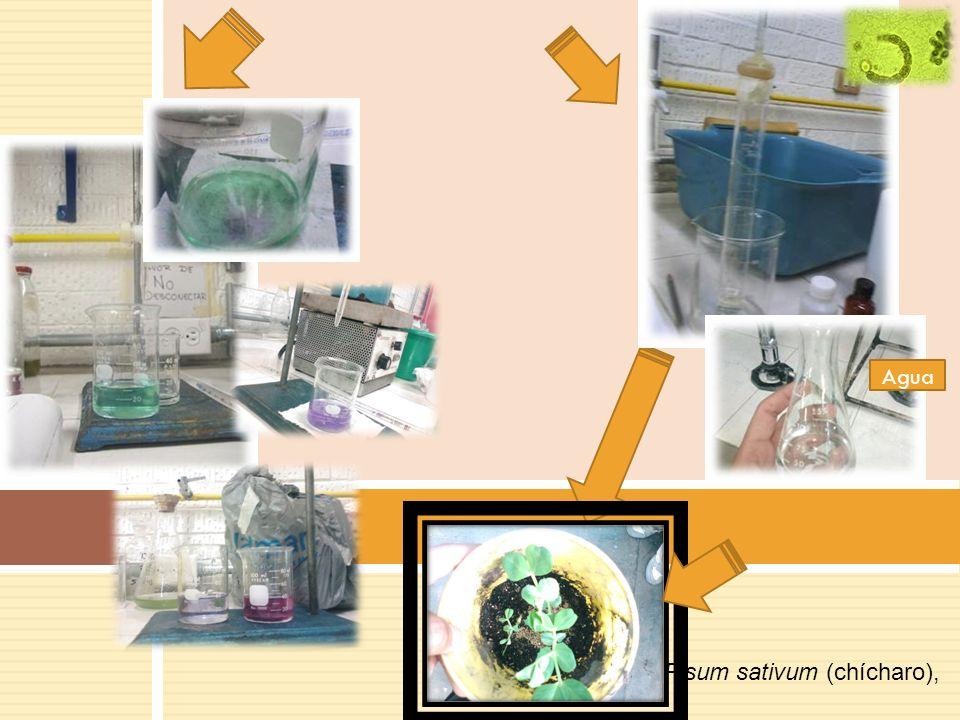 RESULTADOS Fosfatos (mg/ml)Nitrogeno Amoniacal (mg/L) DBO de oxigeno en 5 dias (mg/ml) Chapultepec0.0430.859.5 Bosques de Aragon 0.050.93