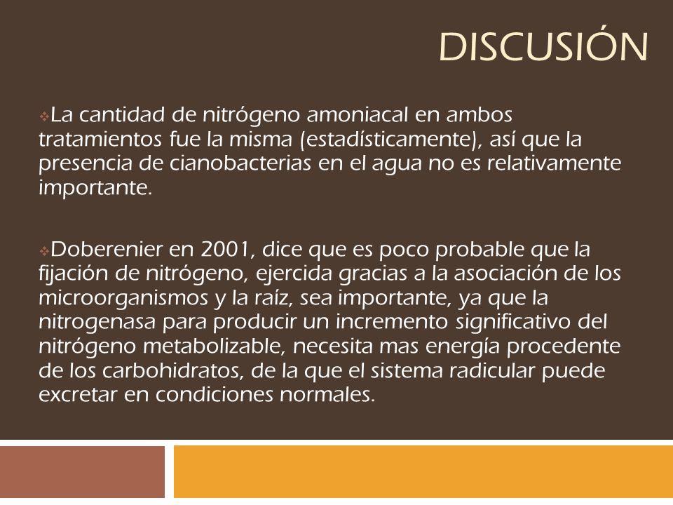 DISCUSIÓN La cantidad de nitrógeno amoniacal en ambos tratamientos fue la misma (estadísticamente), así que la presencia de cianobacterias en el agua
