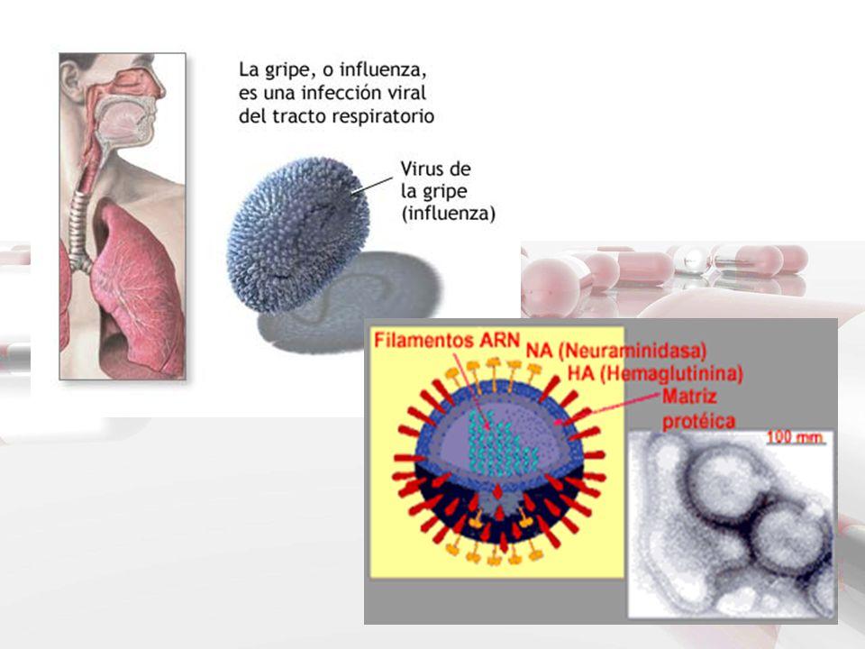 TRATAMIENTO No hay ningún medicamento que cure la gripe, de modo que su tratamiento se reduce al alivio de los síntomas Al ser un proceso vírico no es eficaz el tratamiento con antibióticos, pudiendo dar lugar, en cambio, a resistencias bacterianas.