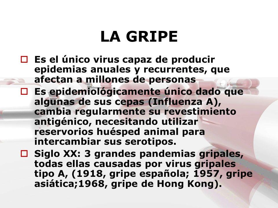 LA GRIPE Es el único virus capaz de producir epidemias anuales y recurrentes, que afectan a millones de personas Es epidemiológicamente único dado que