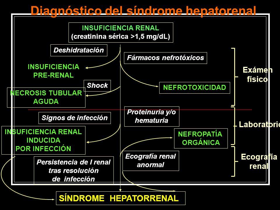INSUFICIENCIA RENAL (creatinina sérica >1,5 mg/dL) Deshidratación Fármacos nefrotóxicos NEFROTOXICIDAD NECROSIS TUBULAR AGUDA Shock Proteinuria y/o he