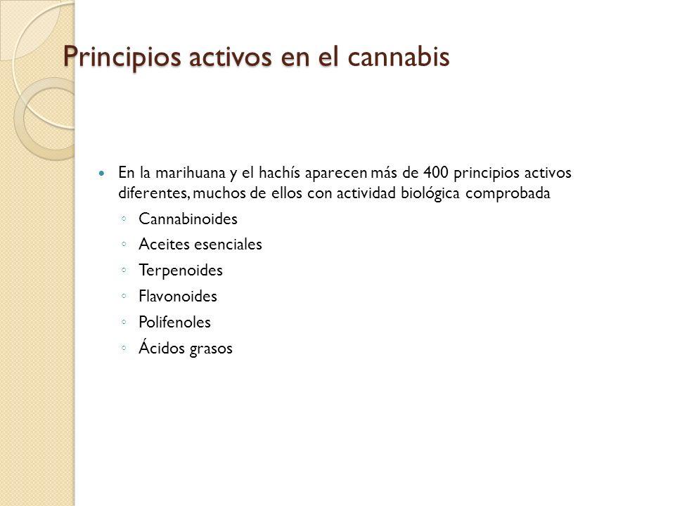 Principios activos en el Principios activos en el cannabis En la marihuana y el hachís aparecen más de 400 principios activos diferentes, muchos de el
