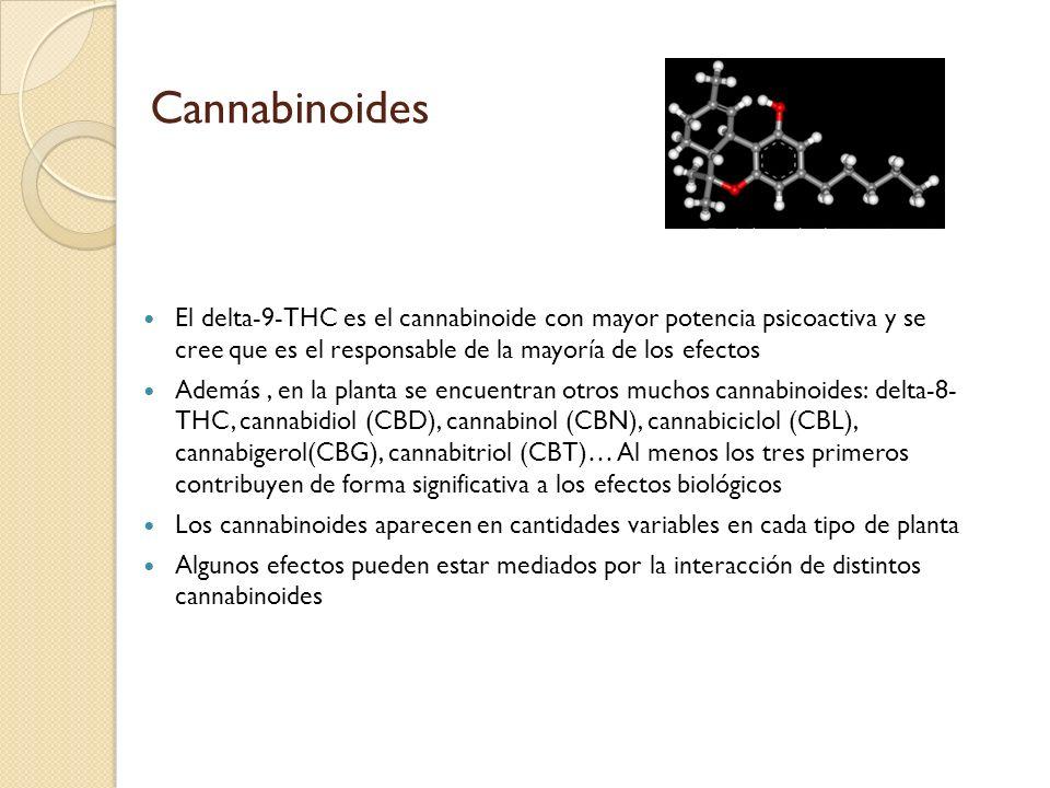 Cannabinoides El delta-9-THC es el cannabinoide con mayor potencia psicoactiva y se cree que es el responsable de la mayoría de los efectos Además, en