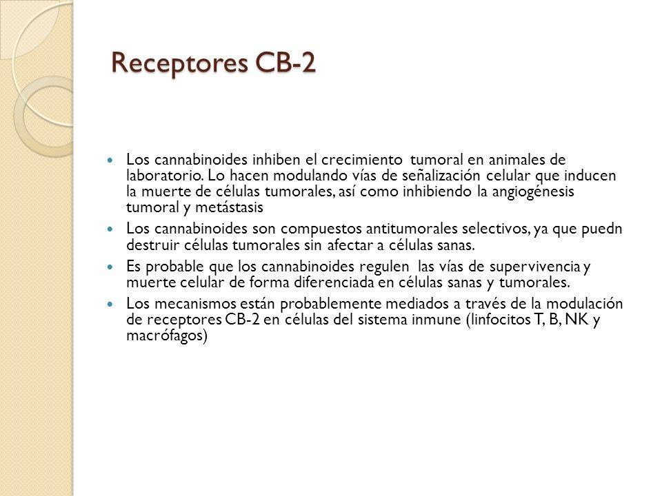 Receptores CB-2 Los cannabinoides inhiben el crecimiento tumoral en animales de laboratorio. Lo hacen modulando vías de señalización celular que induc