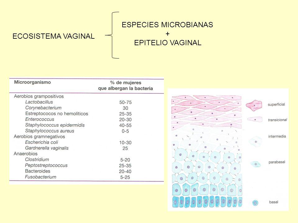 MECANISMOS DE DEFENSA VAGINAL FLORA LACTICA (L.