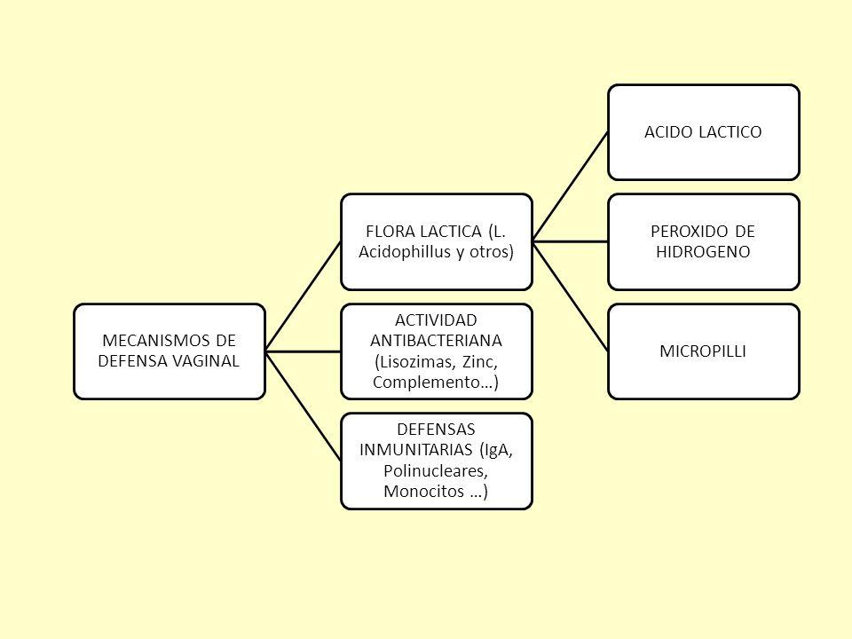CLINICA: PRURITO VULVAR INTENSO Y ESCOZOR LEUCORREA (COLOR AMARILLO GRISACEO Y DE MAL OLOR) DISURIA FRECUENTE EMPEORA CON LAS RELACIONES Y CON LA REGLA (MEJORA ALGO AL TERMINAR ) EN LA EXPLORACION LA VULVA TIENE UN ASPECTO NORMAL O UN POCO ENROJECIDA ESPECULO : FLUJO ABUNDANTE ESPUMOSO CON OLOR A AMINA PUEDE HABER UN PUNTADO ROJO EN VAGINA Y CX