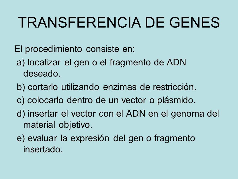 TRANSFERENCIA DE GENES El procedimiento consiste en: a) localizar el gen o el fragmento de ADN deseado.