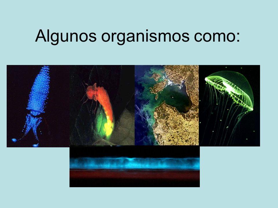Algunos organismos como: