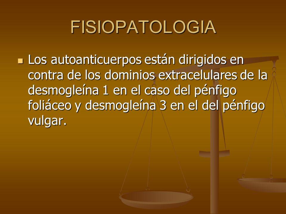 FISIOPATOLOGIA Los autoanticuerpos están dirigidos en contra de los dominios extracelulares de la desmogleína 1 en el caso del pénfigo foliáceo y desmogleína 3 en el del pénfigo vulgar.