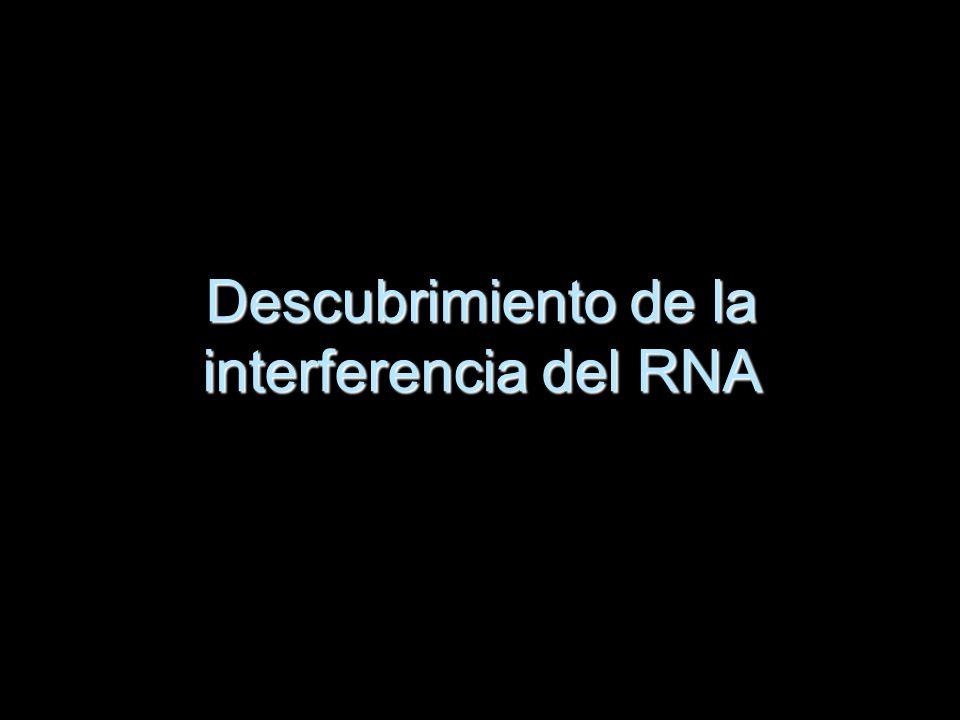 Andrew Fire y Craig Mello Estaban investigando la forma en la expresión génica regulada del gusano nematodo Caenorhabditis e inyectaron moléculas de ARNm de codificación de una proteína muscular que no dio lugar a cambios en el comportamiento de los gusanos.
