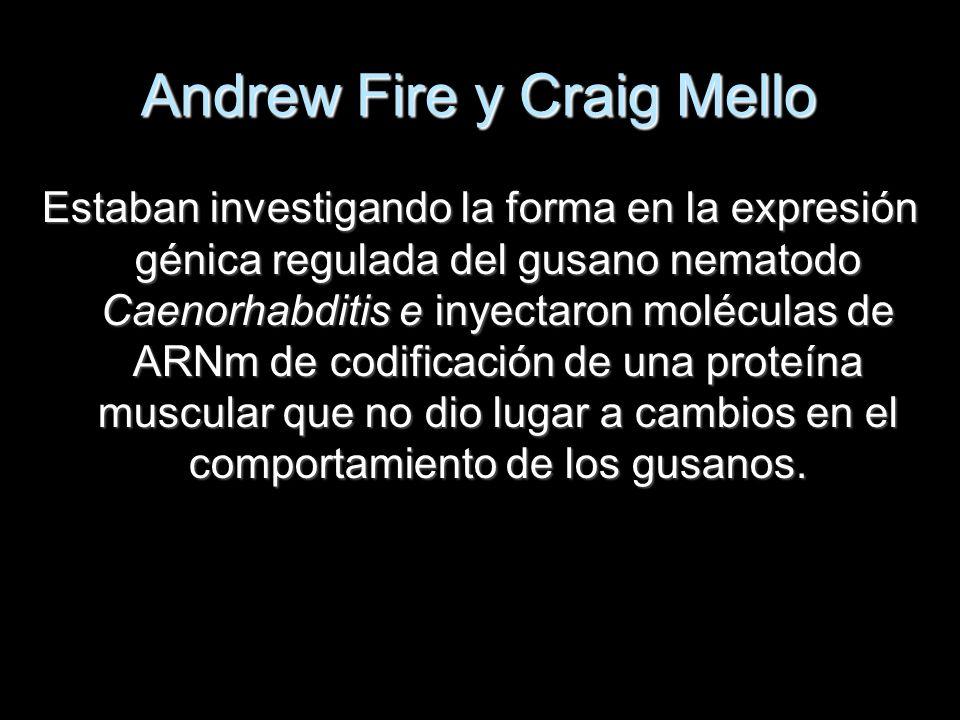 Andrew Fire y Craig Mello Estaban investigando la forma en la expresión génica regulada del gusano nematodo Caenorhabditis e inyectaron moléculas de A
