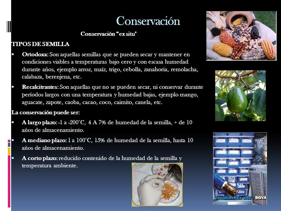 Conservación Conservación ex situ