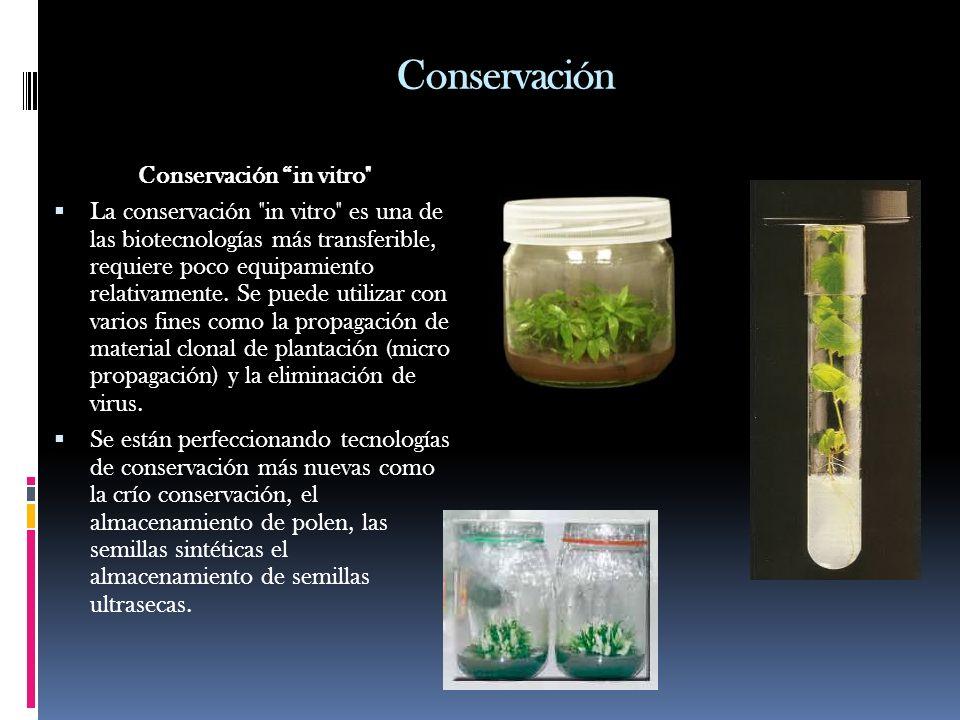 Conservación Conservación in vitro