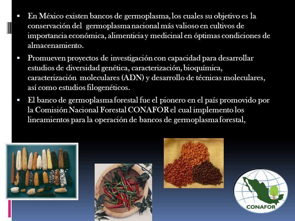 En México existen bancos de germoplasma, los cuales su objetivo es la conservación del germoplasma nacional más valioso en cultivos de importancia eco
