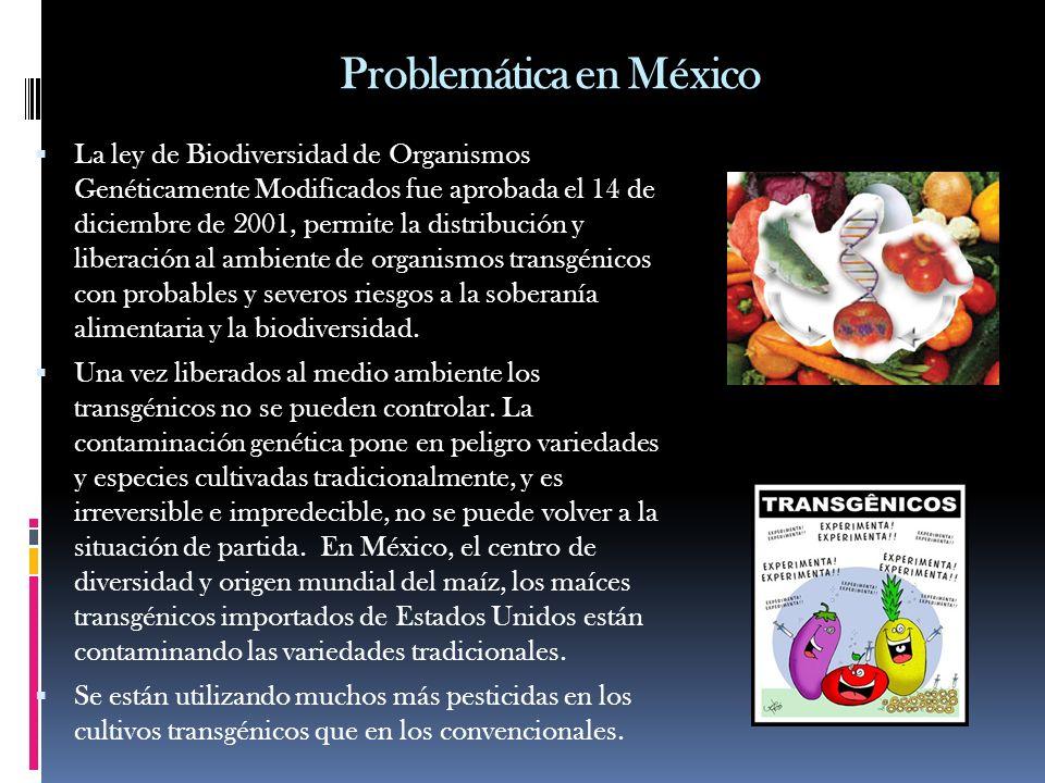 Problemática en México La ley de Biodiversidad de Organismos Genéticamente Modificados fue aprobada el 14 de diciembre de 2001, permite la distribució