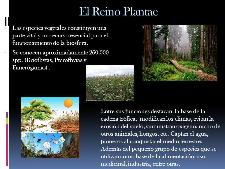 El Reino Plantae Las especies vegetales constituyen una parte vital y un recurso esencial para el funcionamiento de la biosfera. Se conocen aproximada