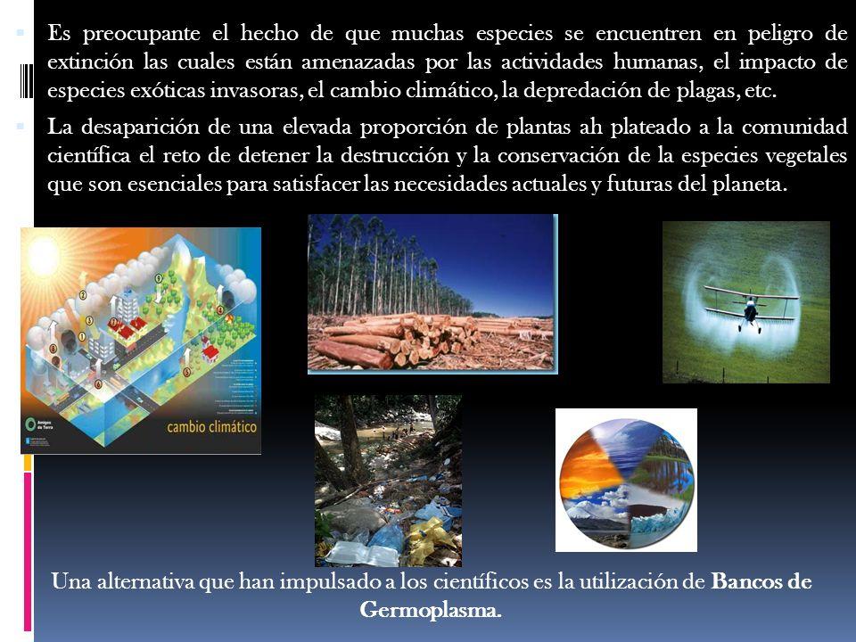 Conclusiones En la actualidad, gran parte de los bancos de germoplasma están dedicados a la conservación de especies de interés agroalimentario, vegetación natural (endémicas o que se encuentran amenazadas de extinción).