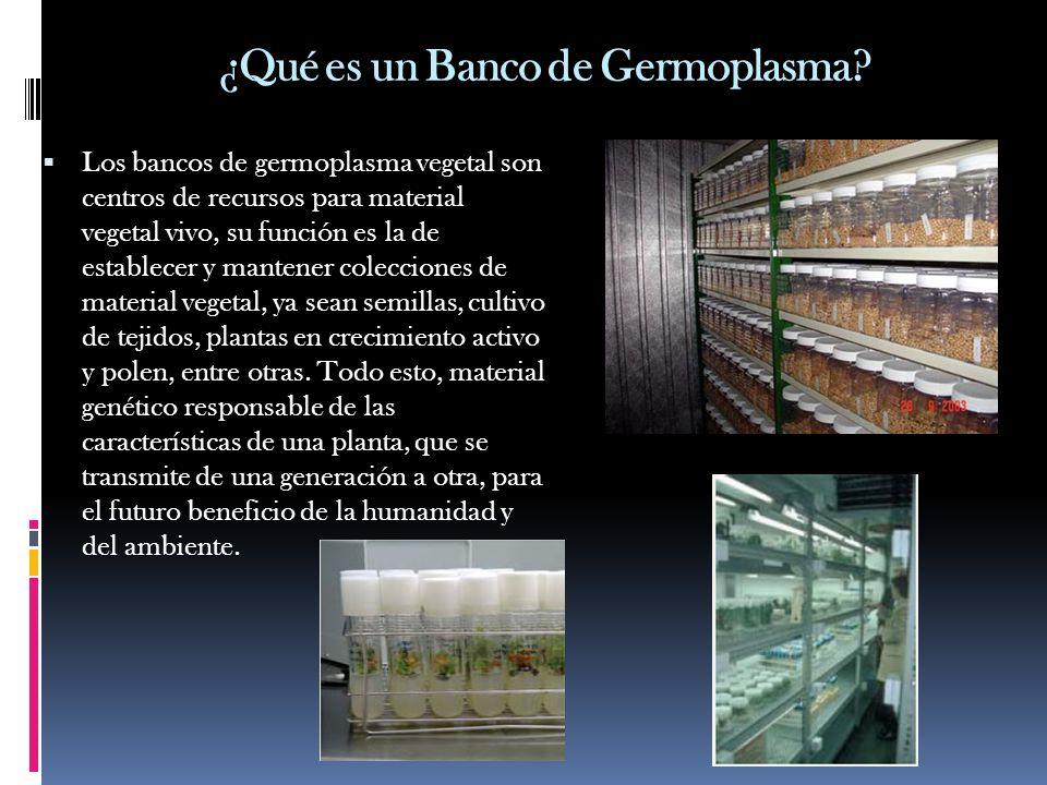 ¿Qué es un Banco de Germoplasma? Los bancos de germoplasma vegetal son centros de recursos para material vegetal vivo, su función es la de establecer