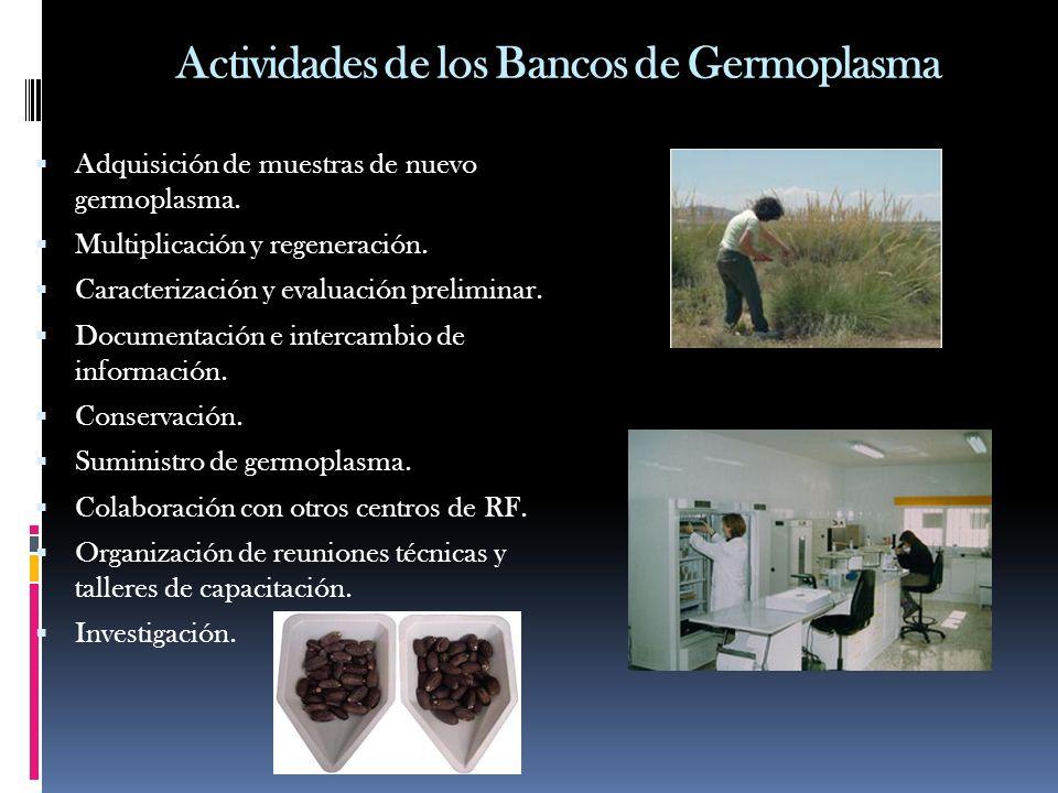 Actividades de los Bancos de Germoplasma Adquisición de muestras de nuevo germoplasma. Multiplicación y regeneración. Caracterización y evaluación pre