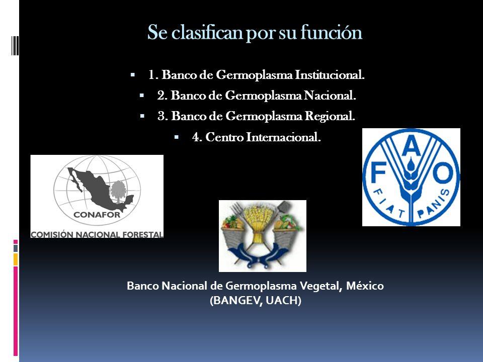 Se clasifican por su función 1. Banco de Germoplasma Institucional. 2. Banco de Germoplasma Nacional. 3. Banco de Germoplasma Regional. 4. Centro Inte
