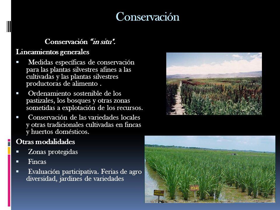 Conservación Conservación in situ