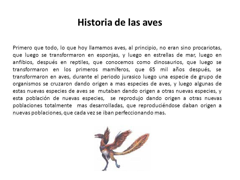 Historia de las aves Primero que todo, lo que hoy llamamos aves, al principio, no eran sino procariotas, que luego se transformaron en esponjas, y lue