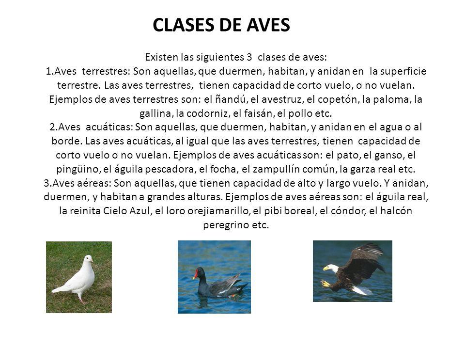 CLASES DE AVES Existen las siguientes 3 clases de aves: 1.Aves terrestres: Son aquellas, que duermen, habitan, y anidan en la superficie terrestre. La