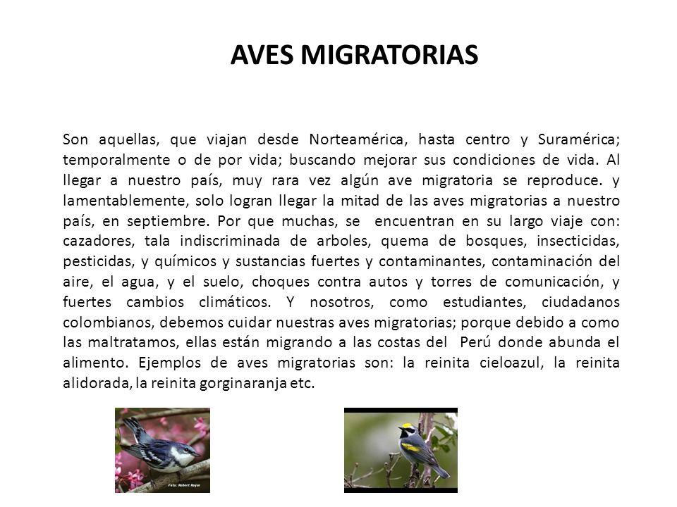AVES MIGRATORIAS Son aquellas, que viajan desde Norteamérica, hasta centro y Suramérica; temporalmente o de por vida; buscando mejorar sus condiciones