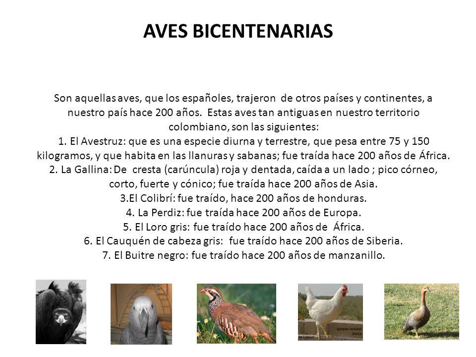 AVES BICENTENARIAS Son aquellas aves, que los españoles, trajeron de otros países y continentes, a nuestro país hace 200 años. Estas aves tan antiguas
