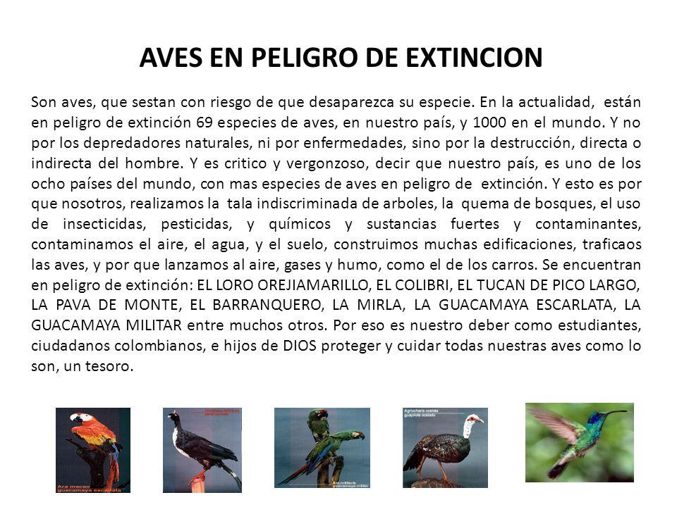 AVES EN PELIGRO DE EXTINCION Son aves, que sestan con riesgo de que desaparezca su especie. En la actualidad, están en peligro de extinción 69 especie