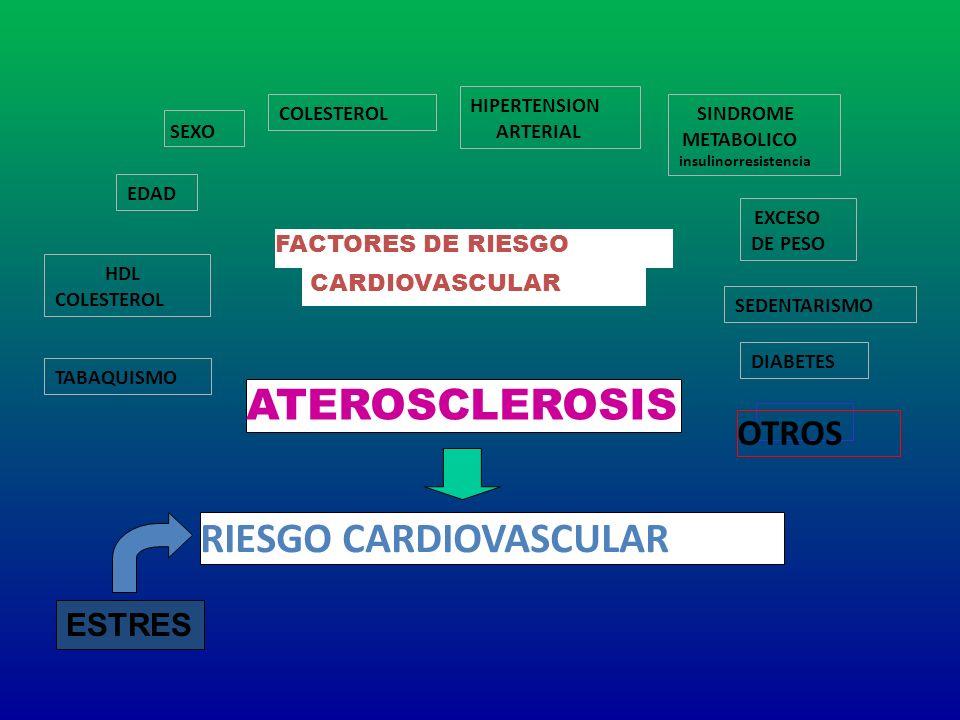 EDAD SEXO HIPERTENSION ARTERIAL COLESTEROL HDL COLESTEROL TABAQUISMO DIABETES SEDENTARISMO EXCESO DE PESO SINDROME METABOLICO insulinorresistencia FAC