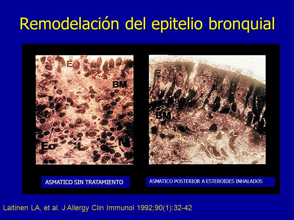Remodelación del epitelio bronquial Laitinen LA, et al.
