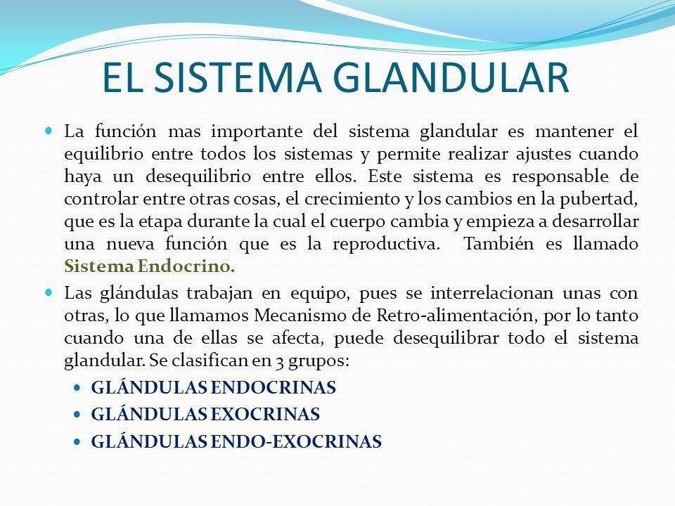 EL SISTEMA GLANDULAR La función mas importante del sistema glandular es mantener el equilibrio entre todos los sistemas y permite realizar ajustes cua