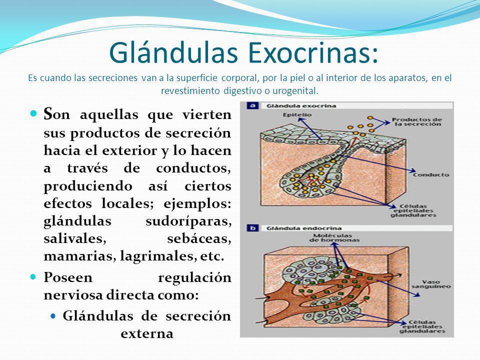 Glándulas Exocrinas: Es cuando las secreciones van a la superficie corporal, por la piel o al interior de los aparatos, en el revestimiento digestivo