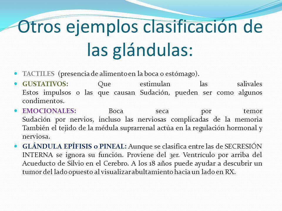 Otros ejemplos clasificación de las glándulas: TACTILES (presencia de alimento en la boca o estómago). GUSTATIVOS: Que estimulan las salivales Estos i