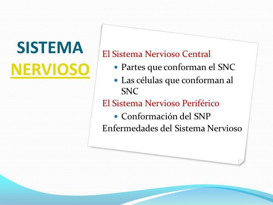 SISTEMA NERVIOSO NERVIOSO El Sistema Nervioso Central Partes que conforman el SNC Las células que conforman al SNC El Sistema Nervioso Periférico Conf
