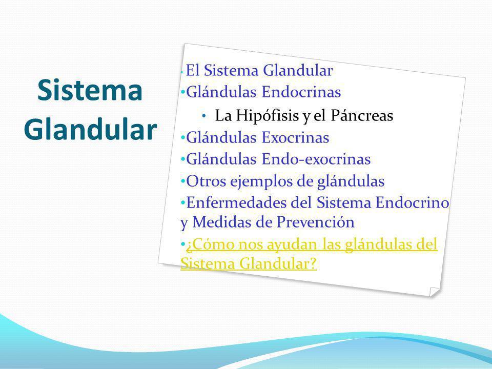 Sistema Glandular El Sistema Glandular Glándulas Endocrinas La Hipófisis y el Páncreas Glándulas Exocrinas Glándulas Endo-exocrinas Otros ejemplos de