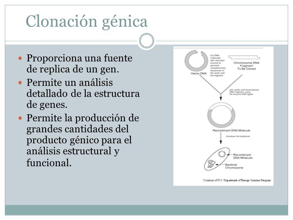 Clonación génica Proporciona una fuente de replica de un gen. Permite un análisis detallado de la estructura de genes. Permite la producción de grande