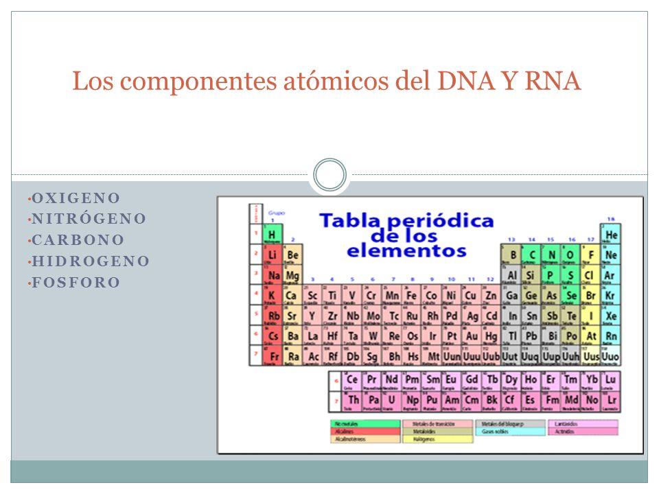 OXIGENO NITRÓGENO CARBONO HIDROGENO FOSFORO Los componentes atómicos del DNA Y RNA