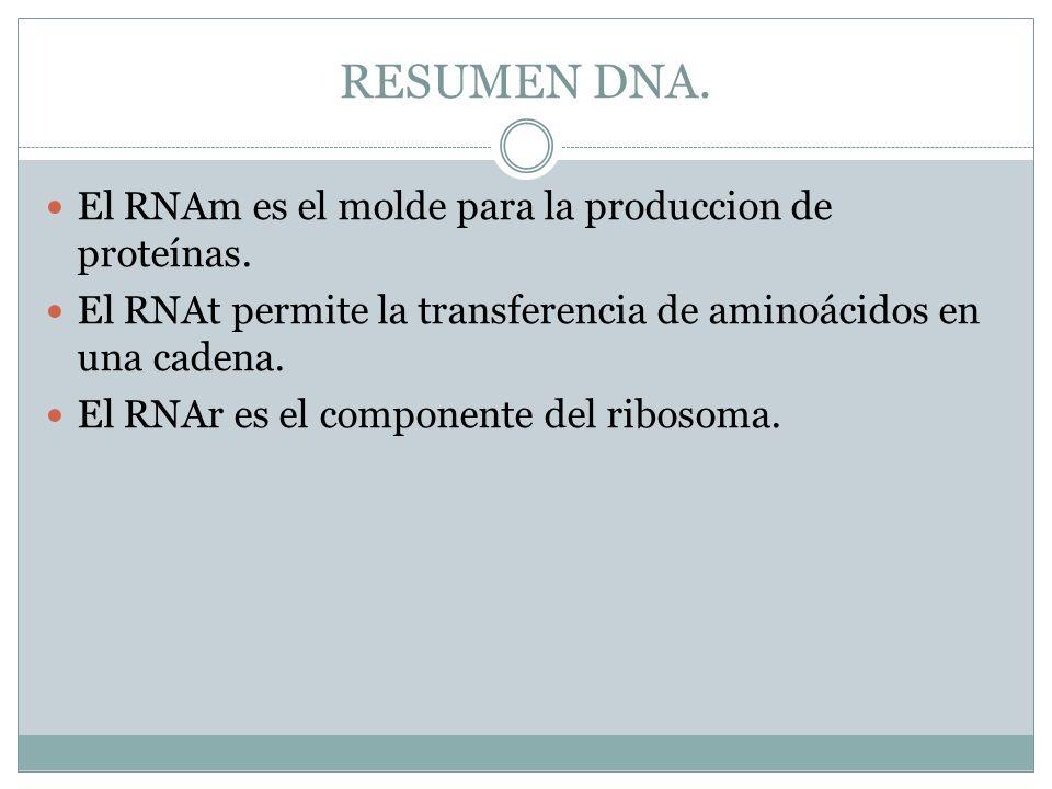 RESUMEN DNA. El RNAm es el molde para la produccion de proteínas. El RNAt permite la transferencia de aminoácidos en una cadena. El RNAr es el compone