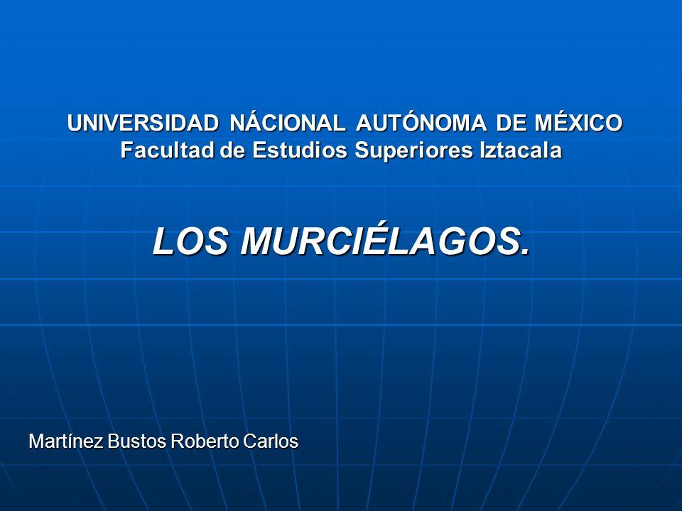 UNIVERSIDAD NÁCIONAL AUTÓNOMA DE MÉXICO Facultad de Estudios Superiores Iztacala LOS MURCIÉLAGOS. UNIVERSIDAD NÁCIONAL AUTÓNOMA DE MÉXICO Facultad de