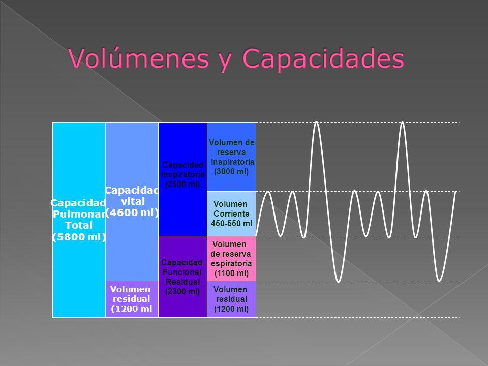 Capacidad Pulmonar Total (5800 ml) Capacidad vital (4600 ml) Volumen residual (1200 ml Capacidad Inspiratoria (3500 ml) Capacidad Funcional Residual (