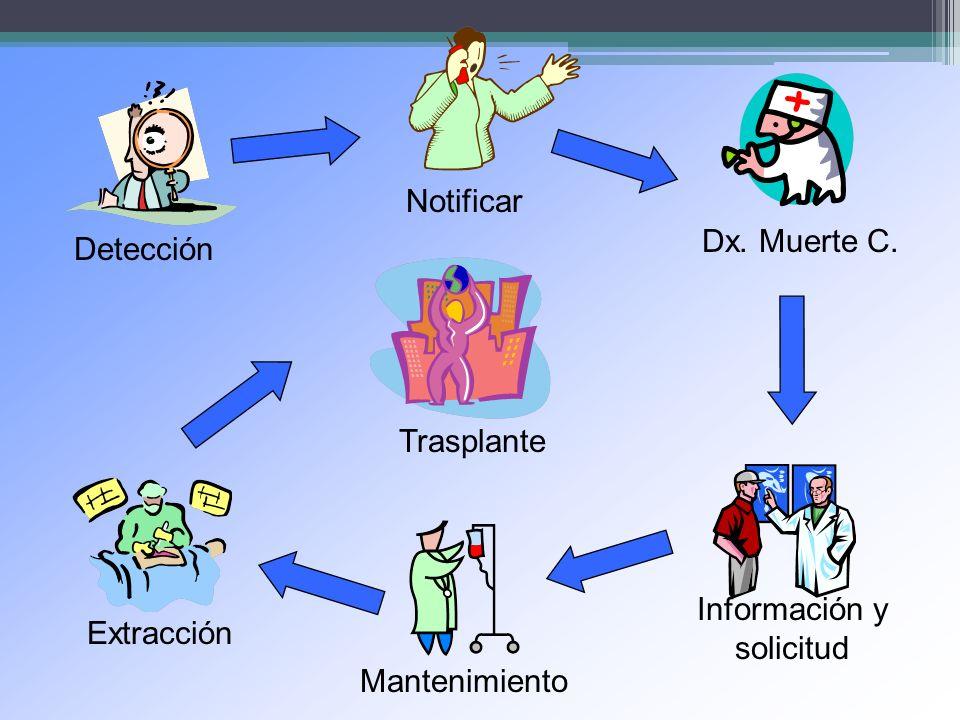 Detección Notificar Dx. Muerte C. Información y solicitud Mantenimiento Extracción Trasplante