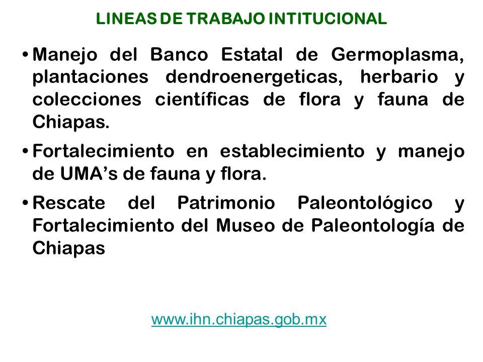 Manejo del Banco Estatal de Germoplasma, plantaciones dendroenergeticas, herbario y colecciones científicas de flora y fauna de Chiapas.