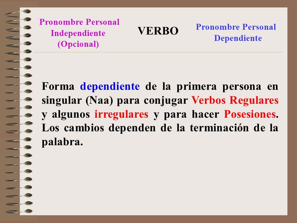 Pronombre Personal Independiente (Opcional) Pronombre Personal Dependiente VERBO Forma dependiente de la primera persona en singular (Naa) para conjugar Verbos Regulares y algunos irregulares y para hacer Posesiones.