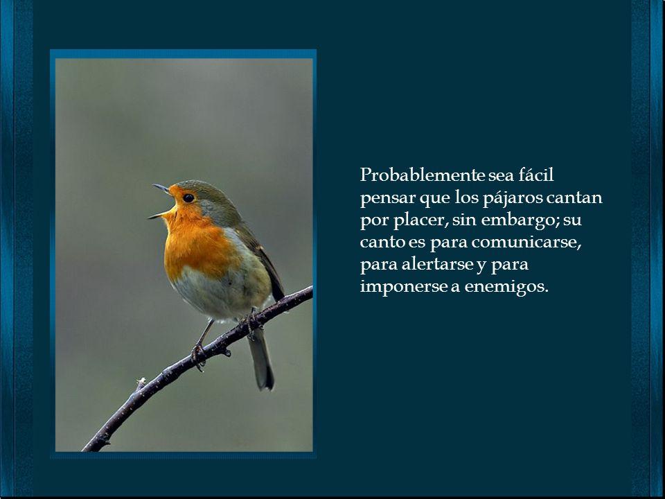 Vida de Pájaros