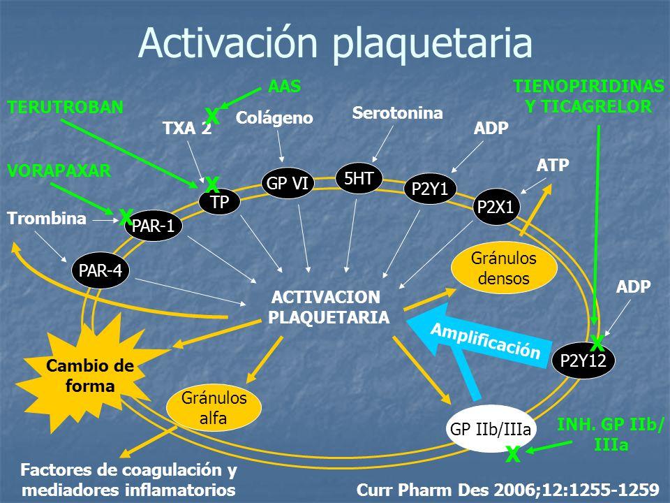 PAR-4 PAR-1 TP GP VI 5HT P2Y1 P2X1 P2Y12 GP IIb/IIIa Gránulos alfa Gránulos densos ACTIVACION PLAQUETARIA Trombina TXA 2 Colágeno Serotonina ADP ATP A