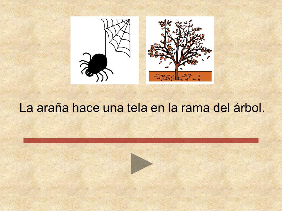 La araña hace una tela en la rama del árbol