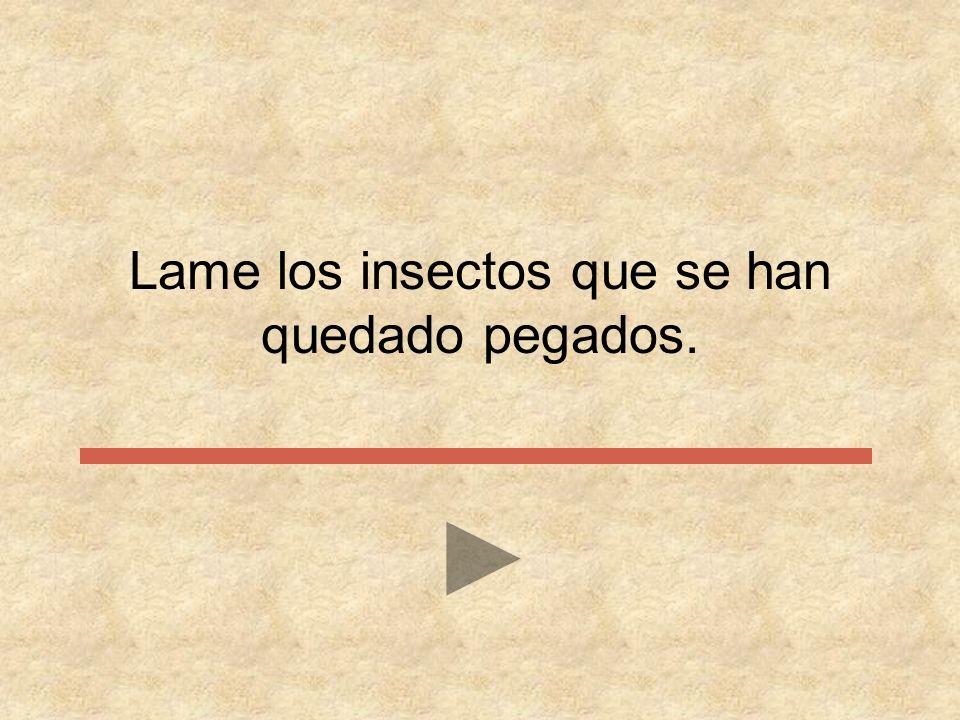 Lame los …………. que se han quedado pegados caracoles objetos insectos gusanos palos